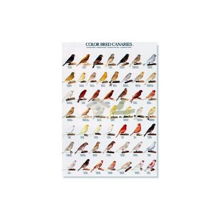 Canarios de Color (2)