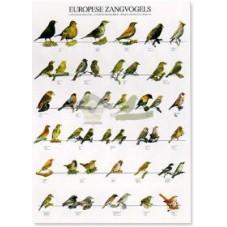 Pájaros cantores europeos