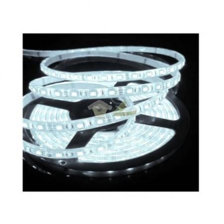 Tira de LED 2 Metros con Clavija
